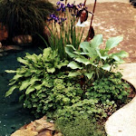 images-Landscape Design and Installation-lnd_dsn_29.jpg