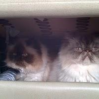 Chooey & Gizmo Hiding.jpg