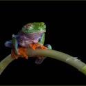 Advanced 3rd - Tree Frog Mid Blink_Terri Adcock.jpg