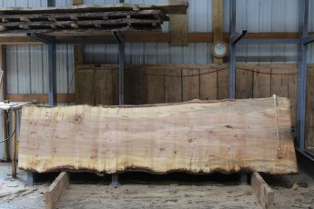 "560  Burly Maple -4 10/4 x  44"" x  33"" Wide x  12'  Long"