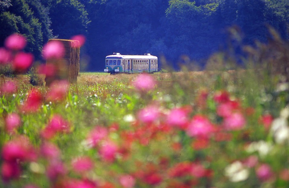 (9)train-touristique-de-la-vallee-du-loir©CDT41-dsourice
