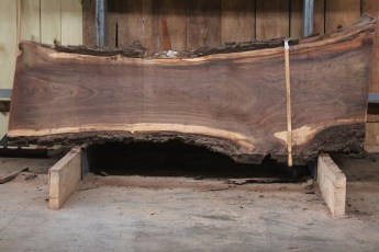 "582  Walnut -2 10/4 x 31"" x  21"" Wide x  8'  Long"