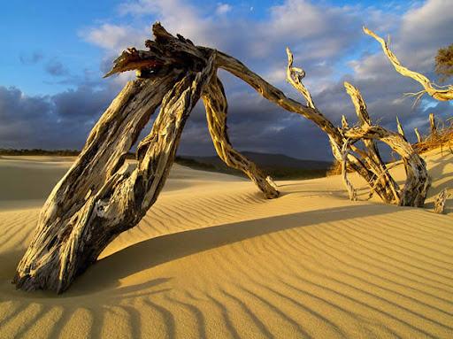 amazing examples of desert landscape