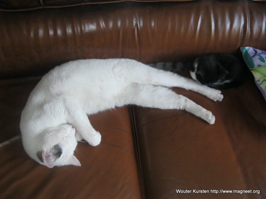 katten - 2011-04-09%2B18-44-35%2B-%2BIMG_0386.JPG