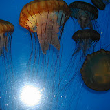 Montery Bay Aquarium, USA - 207779449_c69bdafacd.jpg