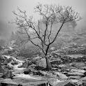 Intermediate 1st - Stickle Ghyll in the Mist_Sarah Walker.jpg