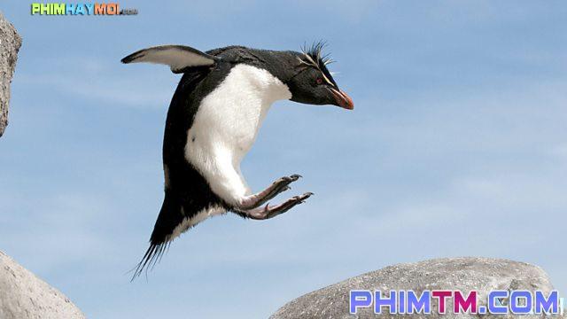 Xem Phim Cuộc Sống Chim Cánh Cụt Bắc Cực - Penguins: Spy In The Huddle - phimtm.com - Ảnh 2