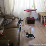 katten - 2011-04-16%2B07-46-38%2B-%2BIMG_0408.JPG