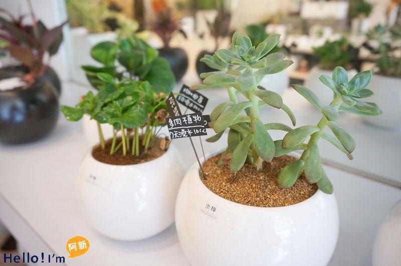 台南盆栽,日光夏蘭植物工房-3