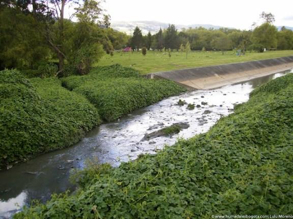Humedal Torca y Cementerio Jardines de Paz