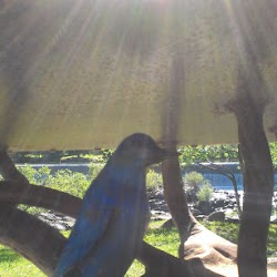 Master-Sirio-Ji-USA-2015-spiritual-meditation-retreat-2-Idaho-Falls-2.1-morning-in-Idaho-Falls-13.jpg