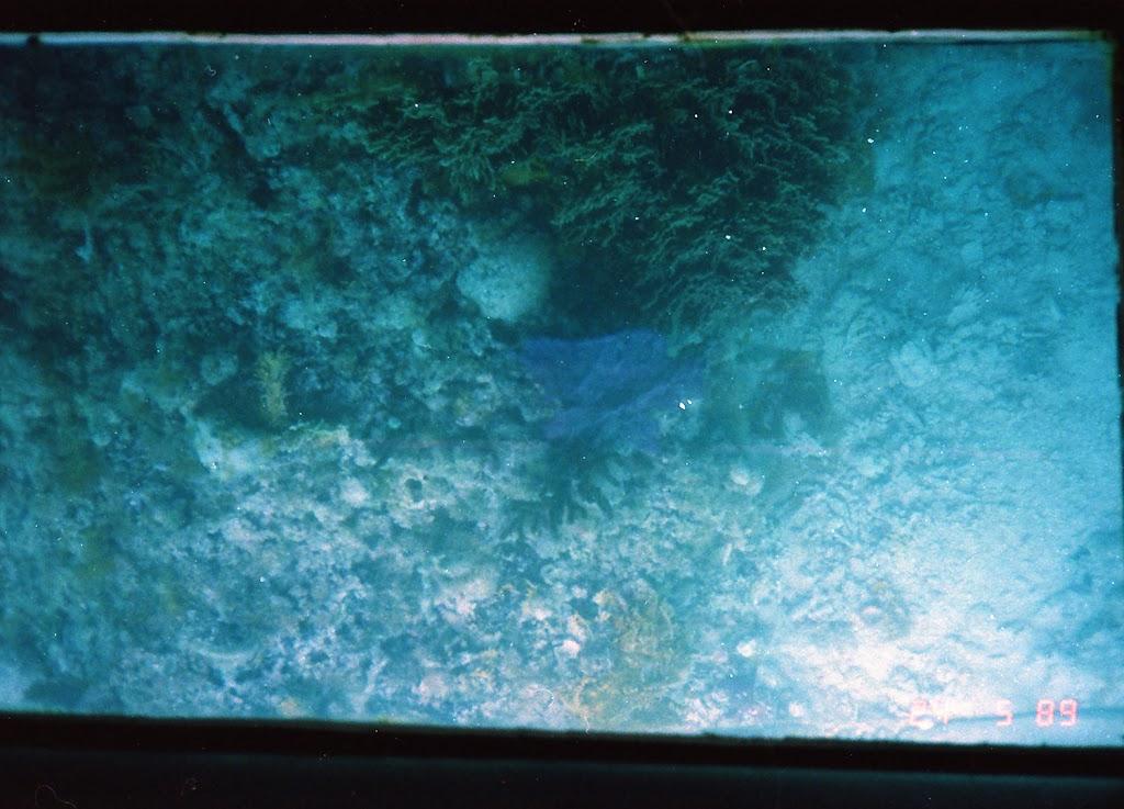 1030Under-Water Sightseeing