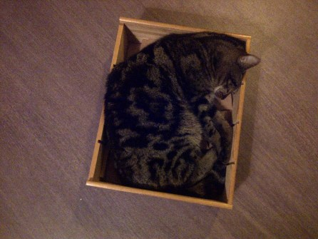 Sleeping cat in a box