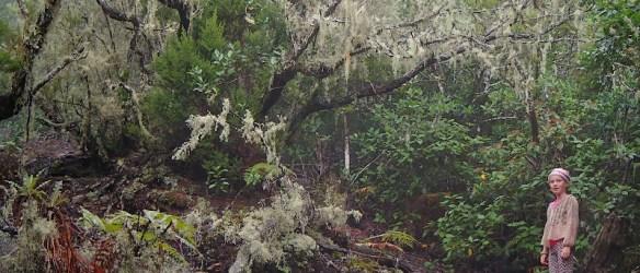 Laurisilva oerbos