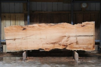 """621 Maple Big Leaf - 3 12/4x 42"""" x 35"""" Wide x  10'  Long"""