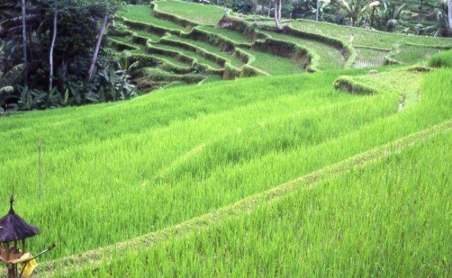 Contoh Ekosistem Alami Buatan Dan Suksesi Smansa Edu Bila Rasa