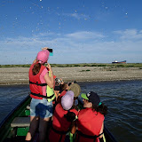 Observare de pasari pe Insula K, cel mai nou pamant romanesc din Marea Neagra