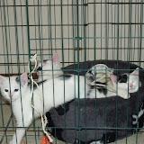 katten - 2010-06-27%2B09-50-47%2B-%2BDSCF1319.JPG