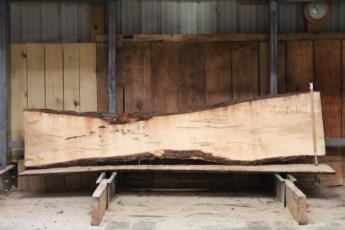 "601  Ambrosia Maple - 10 8/4x 25"" x 13"" Wide x  10'  Long"