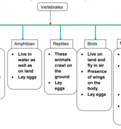 EVS -Grade 4- Animal classification [ 987 x 1405 Pixel ]