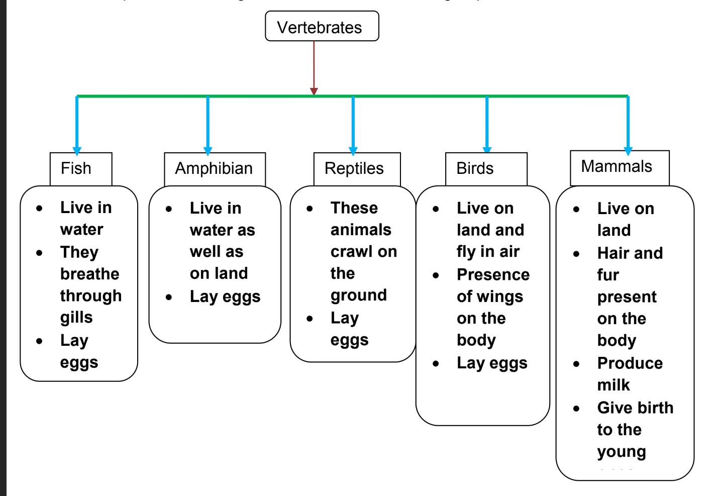 hight resolution of EVS -Grade 4- Animal classification