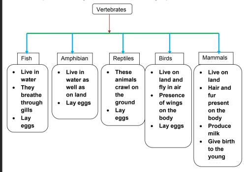 small resolution of EVS -Grade 4- Animal classification
