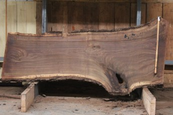 "582  Walnut -4 10/4 x 38"" x  27"" Wide x  8'  Long"
