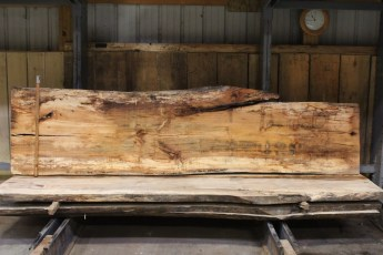 """610 Maple Spalted - 5 10/4x 32"""" x 27"""" Wide x  10'  Long"""