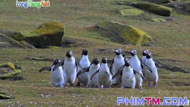 Xem Phim Cuộc Sống Chim Cánh Cụt Bắc Cực - Penguins: Spy In The Huddle - phimtm.com - Ảnh 4
