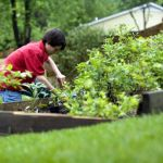 Are You A Lazy Gardener? Tips And Tricks For Creating A Great Space With Minimal Effort