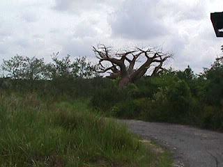 0280African Safari