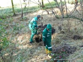 Plantación de árboles, Humedal La Conejera