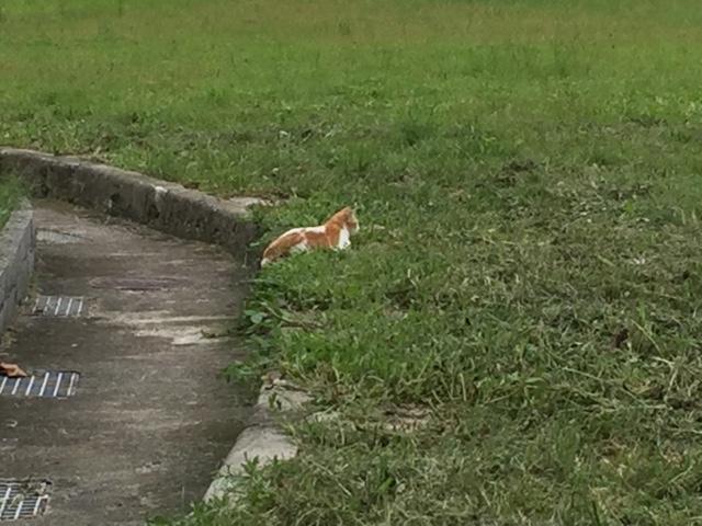 林森北路 原っぱの猫