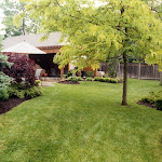 images-Seed and Sod-trees_b17.jpg