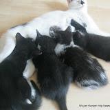 katten - 2011-04-11%2B13-14-23%2B-%2BIMG_0393.JPG
