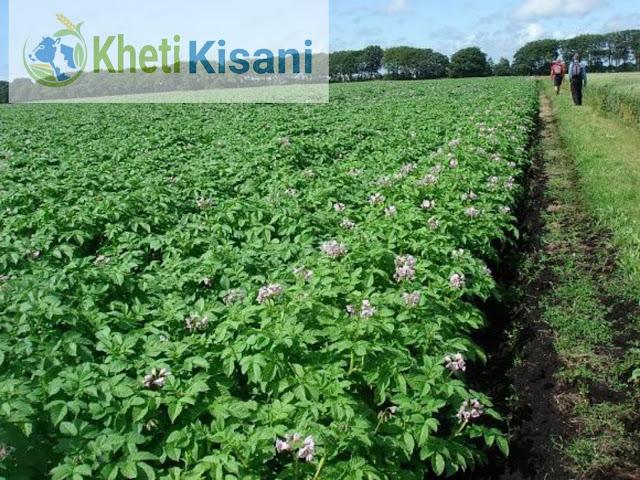 कृषि कैलेंडर :दिसम्बर महीने में किये जाने वाले खेती किसानी के कार्य(Agriculture Calender for December)