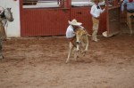 A boy riding (trying to) a young bull.
