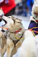 Iditarod2015_0142.JPG