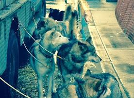 dogs 3.jpg