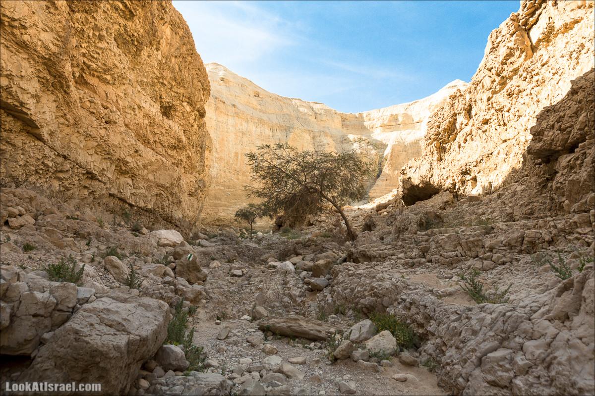 Крепость Зора, Нахаль Ром и нахаль Играх   Zohar, Rom, Izrah   נחל רום, זוהר, יזרח ומצד זוהר   LookAtIsrael.com - Фото путешествия по Израилю