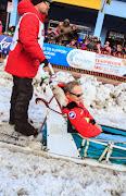 Iditarod2015_0432.JPG
