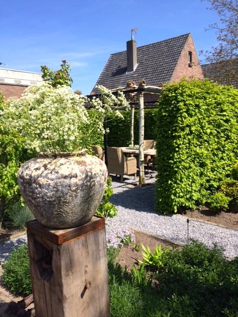vrijdag tuin, pot met fluitekruid.jpg