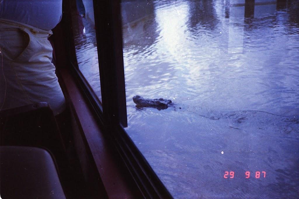 5950Adelaide River Croc Tour