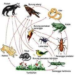 Deciduous Forest Food Chain Diagram 3 Phase Star Delta Control Wiring Pengertian Rantai Makanan (lengkap) - Kumpulan Artikel Biologi