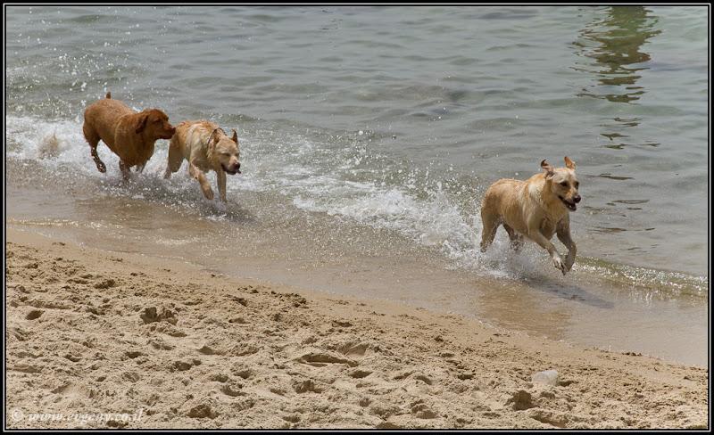 Фото: Тель Авив: Пляжные собаки