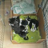 katten - 2011-04-03%2B10-19-11%2B-%2BIMG_0343.JPG