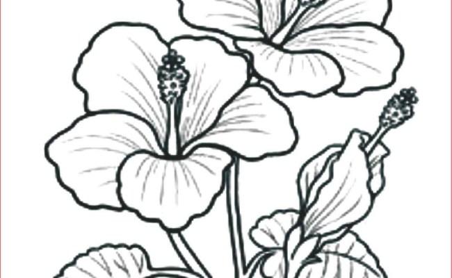 Sketsa Bunga Cute766