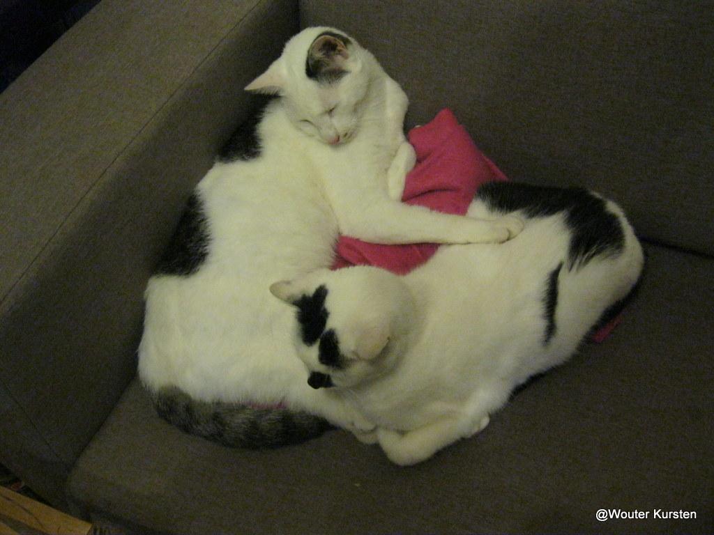 katten - 2012-10-05%2B21-42-55%2B-%2BIMG_0969.JPG