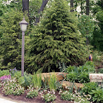 images-Seed and Sod-trees_b4.jpg