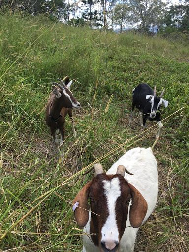 20170419-goats-2017-04-29-18-54.jpg
